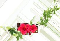 花 植物 画像