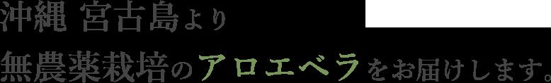 沖縄 宮古島より無農薬栽培のアロエベラをお届けします。