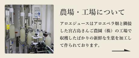 農場・工場について アロエジュースはアロエベラ畑と隣接した宮古島さんご農園(株)の工場で収穫したばかりの新鮮な生葉を加工して作られております。
