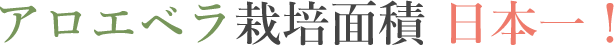 アロエベラ栽培面積 日本一!