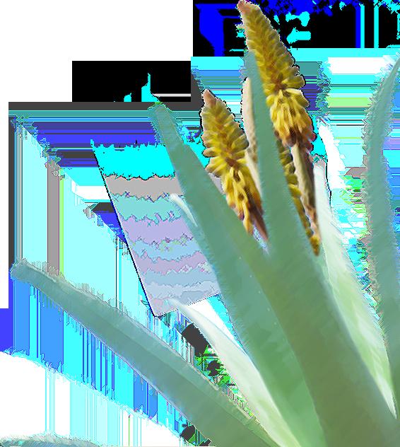 背景画像 花 植物